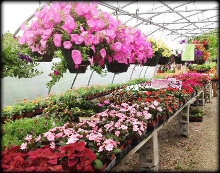 About Bluegrass Garden Center